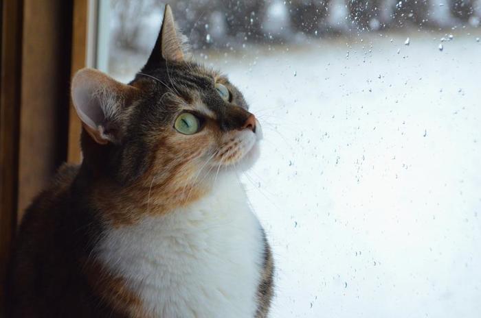 「梅雨」の時期も快適に過ごしたいから。『香り』を愉しむおすすめ「アロマグッズ」