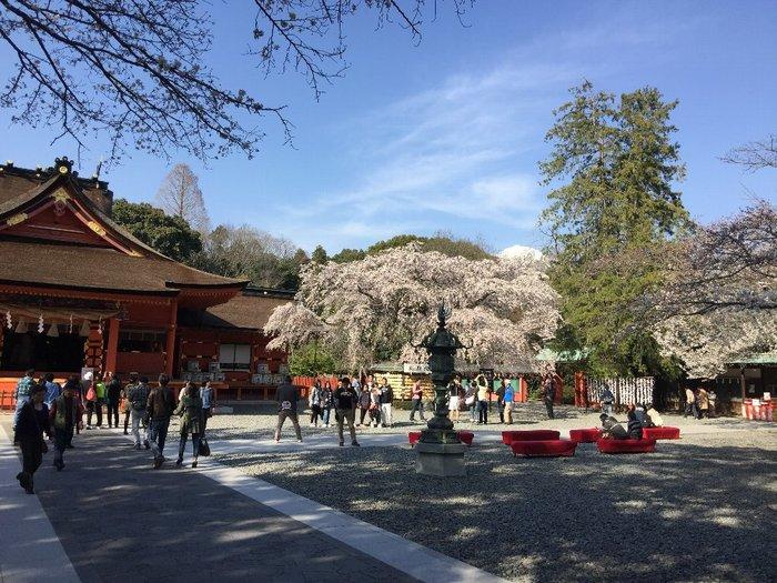 全国に1300社ある浅間神社の総本宮です。富士山を神体山として祀る、富士山要の神社です。本殿は、国の重要文化財に指定されている、東海地方最古の歴史ある社で、富士山の大地の気がみなぎるパワースポットとして知られています。