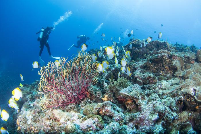 阿嘉島(あかじま)は国立公園の慶良間諸島にある島で、那覇港から高速船で50分ほどで行くことができます。色とりどりの魚たちが泳ぐ珊瑚の海で泳ぎたくなりますね。