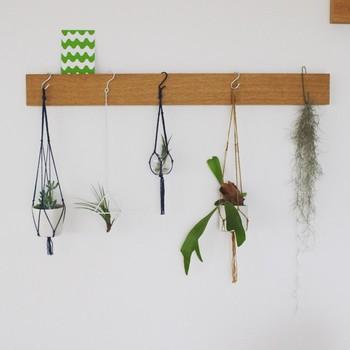 ハンキングプランターなら、植物もまた違った表情に。清々しいだけでなく、センスの良さが伝わる玄関になります。