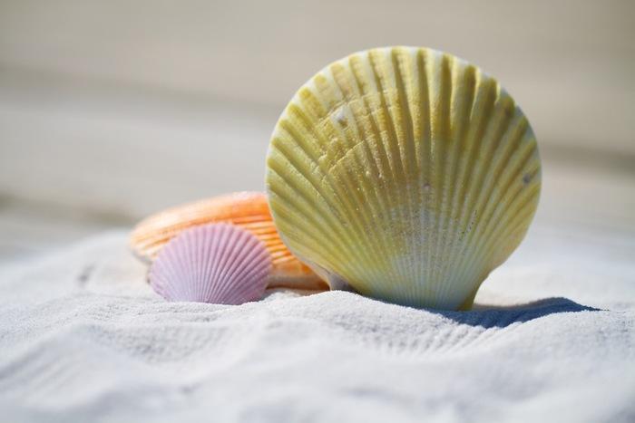 貝殻やポプリを入れてアレンジしても素敵ですね。
