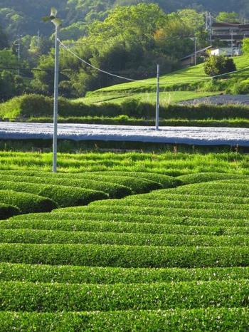 茶畑の他にハーブガーデンもあり、ハーブティー作りやハーブ石鹸の手作り体験をすることができます。