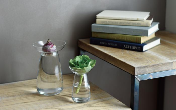 水耕栽培に適した「ガラス」の器。お部屋のインテリアとしても個性的で素敵なのですが、新しい植物の育て方を提案してくれています。この「ガラスベース」は日々の楽しみを与えてくれますね!