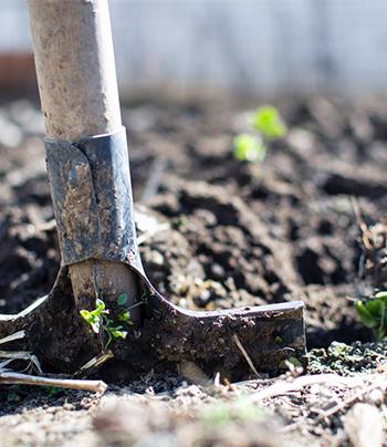 春の植え替え時期。4月から5月。