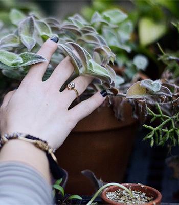 植え替え時にはひと回り大きい鉢に植える。ひと回りより大きな鉢に植えると、土の量に対して根の量が少ないので、吸い上げる水の量が少なくなり、鉢土がなかなか乾きません。そのため根腐れを起こしてしまいます。