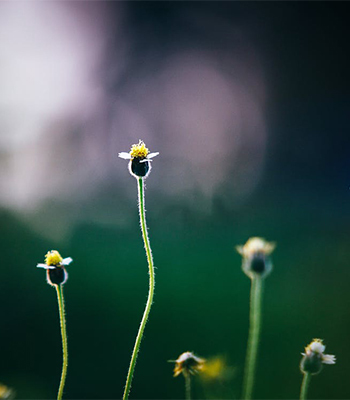 >成長点とは観葉植物の幹の部分でボコッと小さく出ている場所のこと。成長点は1つの幹にいくつかありますから、バランスを考えたうえで成長点の少し上をはさみで切ります。