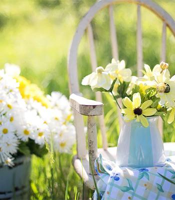 ヒトがケガをしたら傷口を消毒したり包帯を巻いたりするように、植物も枝の切り口はそれと一緒。そのままにしておかず、癒合剤を塗ってあげることが大切。癒合剤とは切り口から菌が入り込むことを防ぐ軟膏のようなものです。癒合剤を塗る事で切り口の乾燥を防ぎ、切り口が雨や風にさらされず、傷口が早く治ります。そして、最後は日光に当てて観葉植物の成長を促しましょう。元気な新芽をだしてくれるようになります。