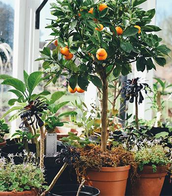 実のなる木があったらいいな。 小さな実から育っていく過程を見ながら 食べごろを待つのも楽しそう。