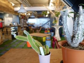 店内はグリーンがいっぱいで、まるでお庭で食事を楽しんでいるような開放的な雰囲気。イベントも随時開催されているそう。