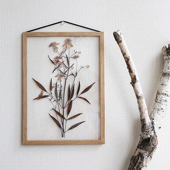 アクリルの額縁に閉じ込めて。絵のようなのに、自然が織りなす花や葉の表情も楽しめます。花だけが浮き立つ魅力は、透明なアクリルならではですね。