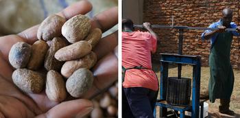 原材料は、農薬や化学肥料に頼らずに栽培されたシアの樹の種子を厳選し、現地で丁寧に抽出されているオーガニックシア油。お子さんや敏感肌の方も安心して使えます。