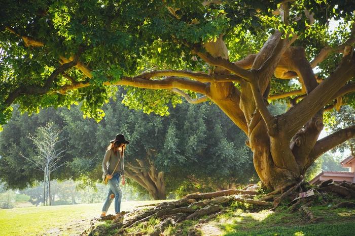 そんな、毎日を忙しく過ごす現代女性におすすめしたいのが「森林セラピー(R)」です。登山ほどハードではなく、心地良いと思えるペースで森を歩くことがメイン。さらに周辺の街や飲食・宿泊施設、温泉などとも連携した体験や、メディカルスタッフによるカウンセリングなどのサービスも。森の環境に癒やされながら、トータルに心身の健康に働きかけるプログラムです。