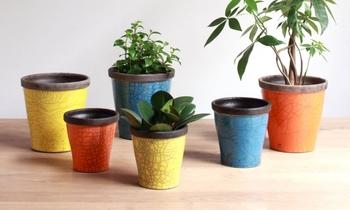 陶器の鉢カバー。鮮やかな色味が植物のエネルギーを伝えてくれているかのよう。緑を引き立たせてお部屋に彩を運んでくれる鉢カバーです。