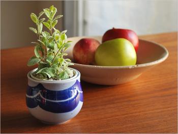 こちらのカップは、カップ&ソーサーのハンドルをそっくり取ってしまったような形をしています。マリンなテイストの器は食卓とグリーンをうまく繋ぐアクセントになります。