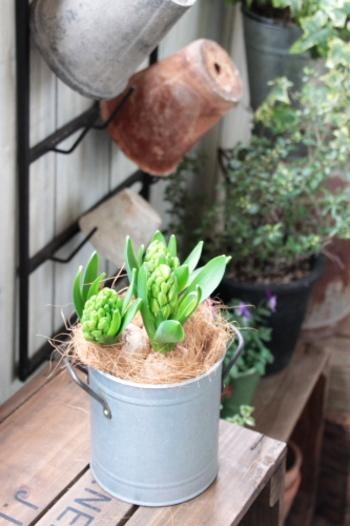 鉢とカバーの間が気になるときや、鉢の中の土を見せたくないときに目隠しアイテムとして使えるのがココヤシの繊維です。植物の湿度や温度を調節する被覆材(マルチ)としての効果もあります。園芸店などで入手できますよ。