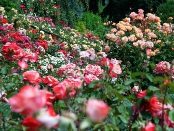 1917年に設立された、500種類以上のバラが約1万株も咲き誇るアメリカでもっとも古いバラ園です。毎年5月の下旬~6月の下旬にかけてローズ・フェスティバルが開催されます。