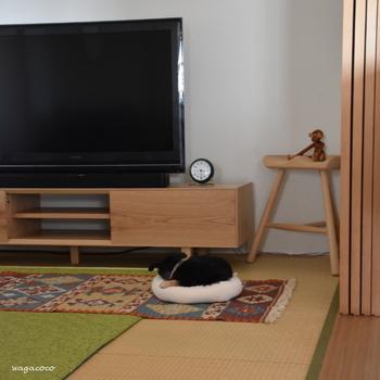 和室で小さく丸くなっているのはもんすけちゃん。こんな小さなクッションでも十分なサイズなんですね。 いたずらしないように、テレビのケーブルは壁に沿わせて整理しました。これなら安心して遊ばせることができます。