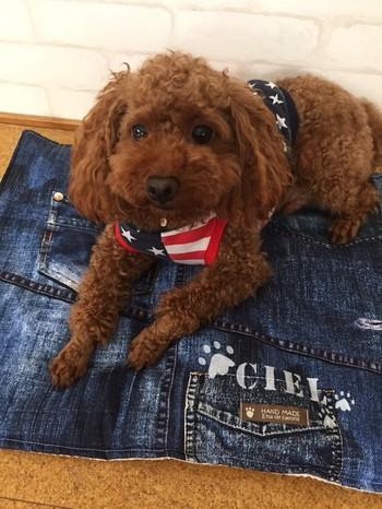 ■デニム地のカフェマット 厚手なので、犬が爪で引っかいてもほつれず丈夫なのが魅力です。お部屋でのくつろぎスペースに敷いたり、お出かけ先で使ったりと1枚あると便利です。  洗濯機でも洗えるから、いつでも清潔に使えてうれしいですね。