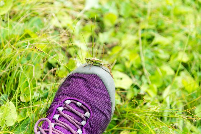 何を選ぶかで疲れにも影響してくる肝心の足元は、歩きやすいスニーカーか、ブーツ代わりにもなるレインブーツをチョイスしましょう。ある程度、履き慣らした靴で行けば、靴擦れなどの心配もありません。