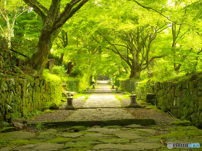 国東コース(K-6)の終点にある国東市の『両子寺(ふたごじ)』。深い森に抱かれたこの場所は、森林浴の森100選にも指定されており、静けさの中、済んだ空気と木々の香りに包まれて歩く贅沢な時間を過ごせます。