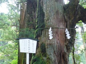広い境内は樹齢約700年の御神木(ごしんぼく)や夫婦杉、親子杉など巨木に囲まれており、静かで凛とした空気が漂います。