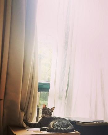レースカーテンで、お部屋の印象がこんなに変わるなんて、ちょっと驚きですよね。陽射しが強くなる夏にこそ活躍するレースカーテン。単なる「目隠し」「日除け」ではなく、お部屋をもっとおしゃれに、心地よく彩るために、お気に入りを選んで窓辺を飾ってみませんか?