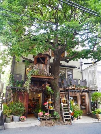"""セレブが住む街として名高いオシャレタウン、広尾には驚きの素敵なお店が! 広尾駅から徒歩1分のところにあるカフェ「レ・グラン・ザルブル」は、フランス語で""""大きな木""""という意味の通りの外観。1・2階はお花屋さん、3階・屋上テラスがカフェになっていて、ツリーハウスには外に掛かった木製の階段と、2階の踊り場から入れますよ。"""