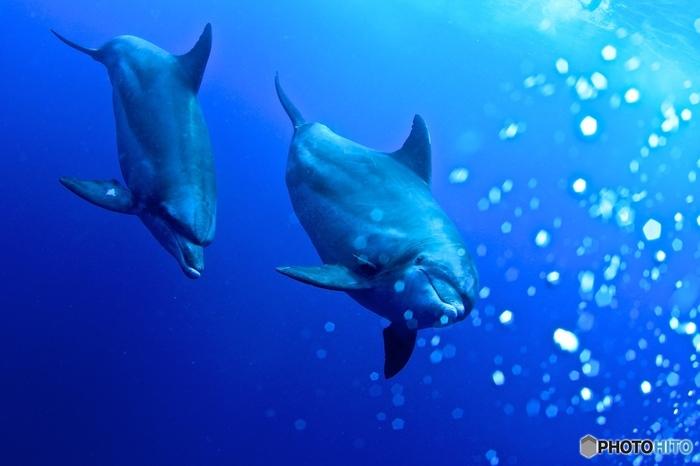 父島はまさに生命の宝庫。キュートな笑顔で海の中を自由に泳ぎまわるイルカ達にも一年中、出会える離島なんです。