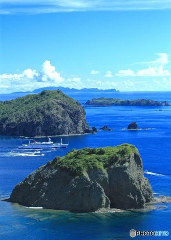 父島からさらに南へ50km、約2時間の船旅で到着する母島。緑豊かな山には、亜熱帯の高木林が生い茂っています。