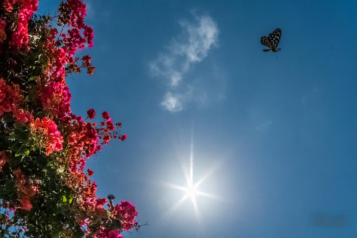 西表島は、蝶々を夢中で追いかけていたあの頃を思い出してみたい、子どもごころを忘れない方や冒険家の心を持つ方におススメの島です。