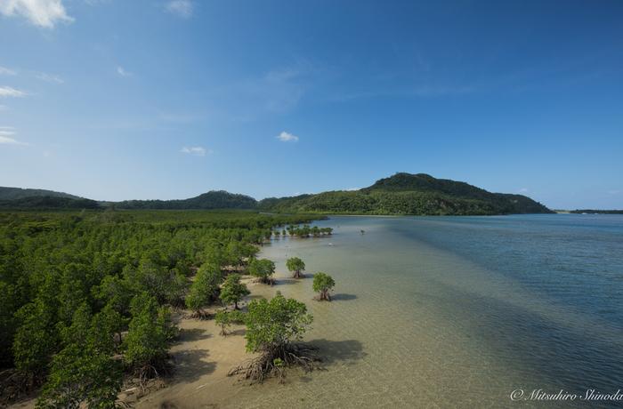 亜熱帯ジャングルと海、シーカヤックを楽しみたいなら西表島(イリオモテジマ)。イリオモテヤマネコの生息地としてもでも知られる沖縄の離島です。