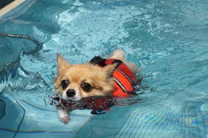 一生懸命泳ぐ姿もかわいいですね!ちなみに、小型犬専用の小さなプールも完備されているので、初心者ワンちゃんにもおすすめです。
