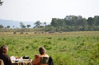 海外でのグランピングでは、ゾウなどの野生動物をこんなに間近で見ることができるツアーも。こちらはマサイマラ国立保護区のグランピングです。
