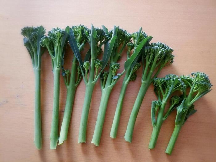 茎ブロッコリーの一種で、花の部分も茎の部分も美味しい野菜です。先端の花の部分はブロッコリーに似ていますが、茎はアスパラの様なコリッとした食感です。
