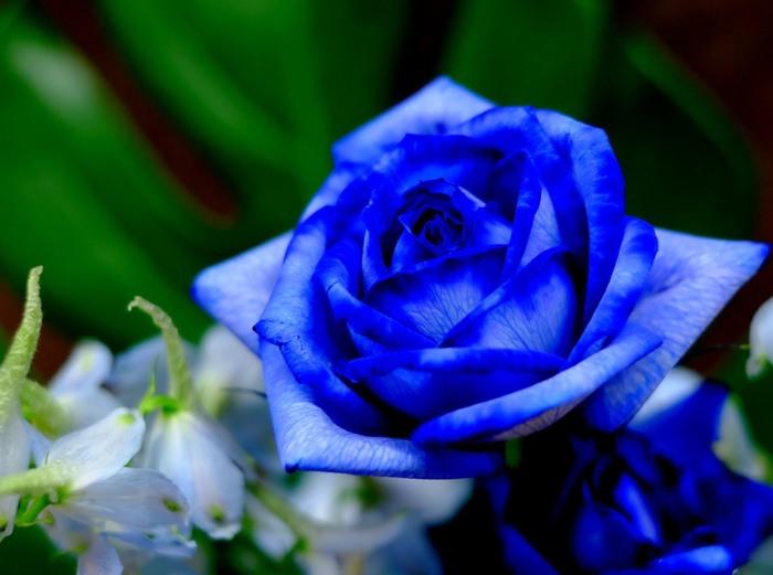 花言葉を添えればもっと素敵な贈りものに。シーン別おすすめ《花束10選》