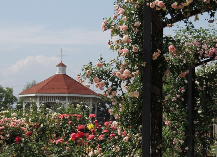 600種類7000株ものバラが植栽された園内。晴れわたっら園内をゆっくり歩くとバラの甘い香りで満たされます。前世は中世の貴族だったに違いない・・・。といらぬ妄想をしてみたり。  園内には東屋があったり、バラの苗や花の苗がたくさん売っています。入園無料なのも嬉しい。