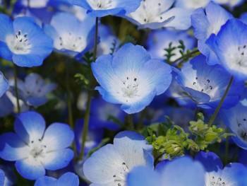 小さな小さな可憐な花です。