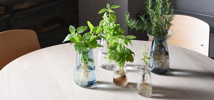 ミントやローズマリーなどのハーブはもちろん、水耕栽培するなら根っこまで見えるガラスのベースがおすすめ。根まで見える事で、なんとなく生命感を感じたりしませんか? こちらは、種類を問わず、植物の美しさを引き出してくれるフォルムが魅力のベースです。