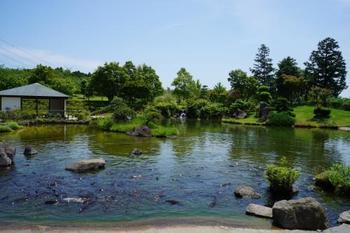 池が美しい日本庭園では鯉が来園者を迎えてくれます。静かな池の辺りを歩くと忙しい日々の疲れがほぐれるよう。