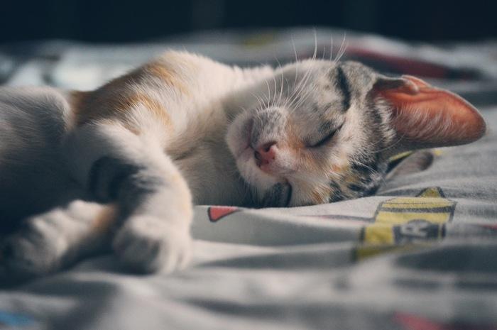 最近、気持ちのいい睡眠できていますか?