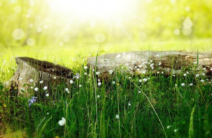 森林の気温や湿度、音などを含めた環境の快適さや、木のもたらす香りのもと「フィトンチッド」という成分がストレスを軽減し、健康に好影響をもたらしていると言われ、研究が進められています。心理的な心地良さだけでなく、ストレスホルモンや交感神経活動の低下(リラクゼーション)など、体に働きかける効果も証明されています。森が持つ癒しの力をもっと積極的に取り入れ、心身のコンディションを整えるプログラムとして、いま注目を集めているのが「森林セラピー(R)」です。
