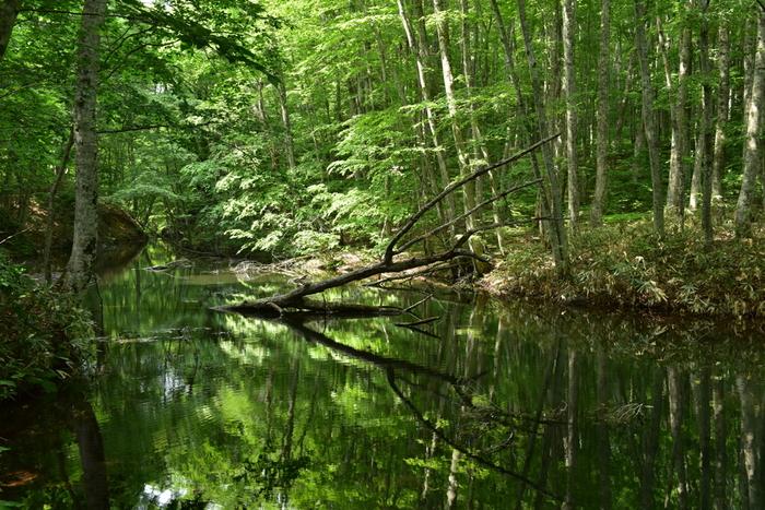「奥入瀬渓流(おいらせけいりゅう)」は、青森県十和田市にある天然記念物・特別名勝地。十和田湖畔子ノ口(ねのくち)から焼山までの約14kmの渓流のことを言います。車道と遊歩道が整備されているので、レンタサイクルで十和田湖まで行くのがおすすめです。