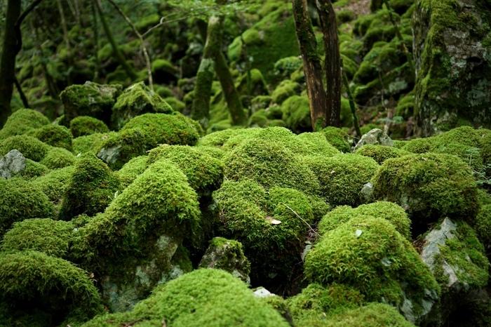 徳島県の勝浦郡にある「山犬嶽」の巨石郡と水苔