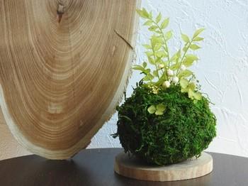 苔は木との相性がぴったり。 木の台座の上に置くと、ナチュラルなインテリアとして楽しめます。
