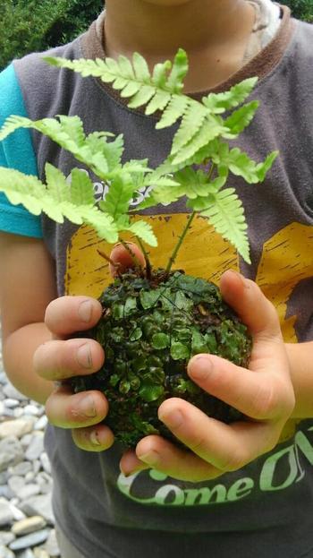 しっかりと苔を満遍なく貼りこみます。    土団子を作る要領で。 子どもと一緒に楽しんでも。