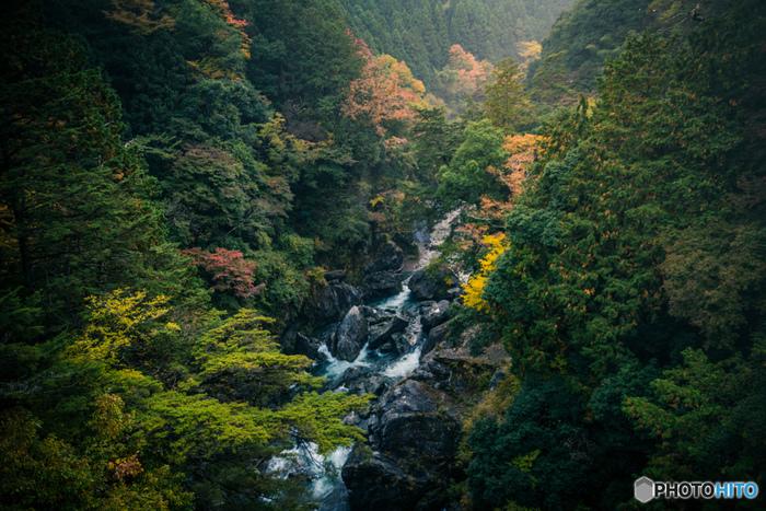 【鳩ノ巣渓谷遊歩道】(約1時間15分・約2.5km)/ふつうレベル 鳩ノ巣渓谷、白丸湖、数馬峡など湖畔と渓谷沿いを歩きます。渓谷にかかる数々の橋や点在する池の景観、また秋には紅葉の名所として人気です。