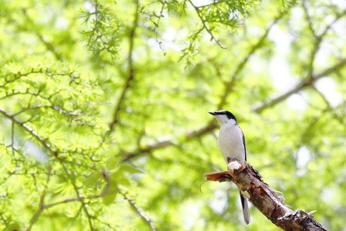 現在、全国62の森が「森林セラピー基地」として認定されています。森林ウォーキングだけではなく、専門知識を持ったスタッフと、健康やリラクゼーションを目的としたプログラムが用意されていることが特徴。