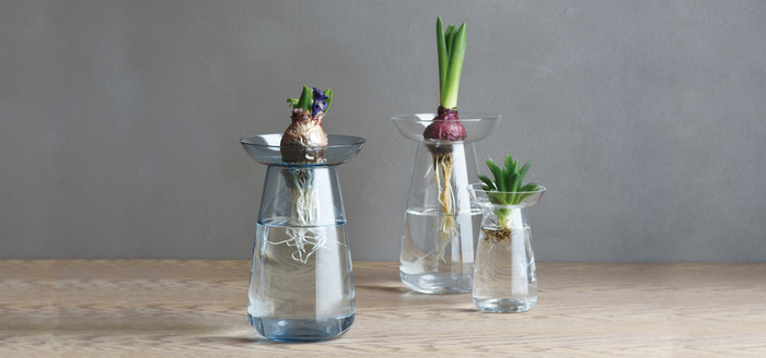AQUA CULTURE VASE(アクアカルチャーベース)は球根や多肉植物を水栽培できる、ちょっぴり変わったフラワーベースです。2つのパーツに分かれていてお手入れも簡単、根の部分までおしゃれに見せられるのが、ガラス製ならでは。