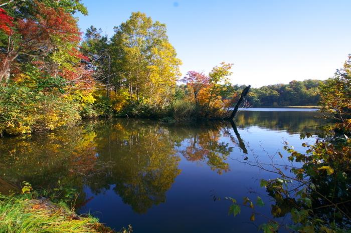 ブナの原生林や高山植物、個性的な温泉に恵まれた「八幡平ゾーン」。セラピーロード「大沼」は夏には花々が咲き乱れ、秋には湖面に紅葉が映る美しい道。「蒸ノ湯」は地面から湯気が立ち上るダイナミックな景観を楽しめる道です。こちらには八幡平温泉郷があり、お湯の癒しもたっぷりと。このほか大湯温泉郷を抱く「大湯ゾーン」、市街地に近くアクセスしやすい「東山ゾーン」があります。