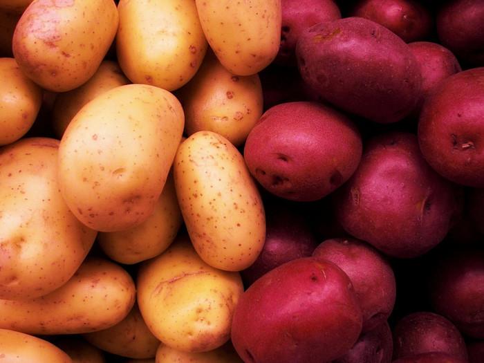 彩りは斬新、でも味はふつうのジャガイモだから、好き嫌いを選ばずお客様に出せるカラーポテト。使うなら、火を通しても色を保てる品種がおすすめ。たとえば、紫のじゃがいもは「シャドークイーン」や「キタムラサキ」、赤は「ノーザンルビー」や「ドラゴンレッド」などです。